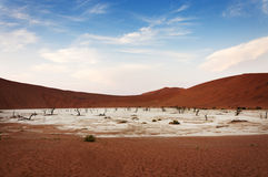 View of the Deadvlei in Namibia Royalty Free Stock Photography