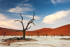 View of the Deadvlei in Namibia Stock Photography