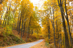 View of the deciduous forest Stock Photo