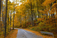 View of the deciduous forest Royalty Free Stock Photo