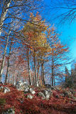View of the deciduous forest Royalty Free Stock Image