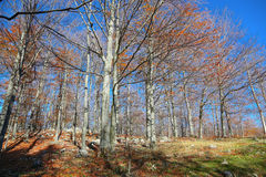 View of the deciduous forest Stock Images
