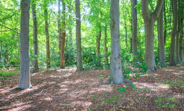 View of a deciduous forest Stock Photo