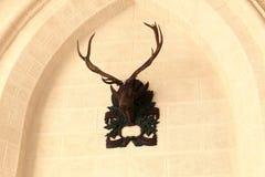 View of deer head Royalty Free Stock Image