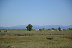 View at the Delta of  Ebro river in Spain Stock Photos