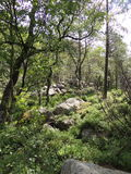 View of a dense forest. Taken in Norway Royalty Free Stock Photo