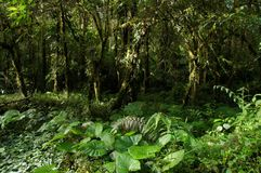 A view of dense rainforest vegetation with ocational sunbeams. Panama stock image