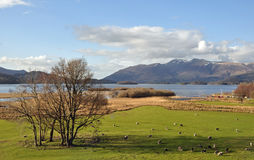 View of Derwentwater, Lake District National Park, England, UK Stock Photography
