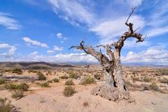 Desert Tabernas in Almeria Province Spain. View of the Desert Tabernas in Almeria Province Spain Stock Image