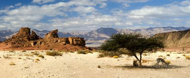 View on desert valley of Timna Park, Israel Royalty Free Stock Photo