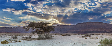 View on the desert valley of Timna park, Israel Stock Image