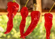 Dried red bell pepper Stock Image