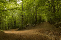 View of a dirt road in the green forest Stock Photo