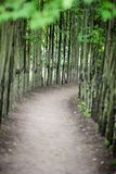 Dirt walk way path lined with thin trees on both sides stock images