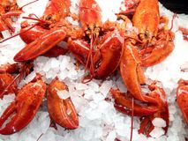 Cooked lobsters. View at the display case in the store with cooked lobsters on the ice royalty free stock photos