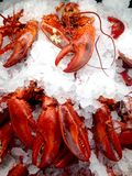 Cooked lobsters. View at the display case in the store with cooked lobsters on the ice royalty free stock photo