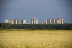 View of distant residential buildings from the wheat field royalty free stock photography