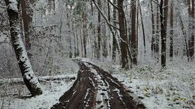 View of ditry road in the winter forest.  stock footage