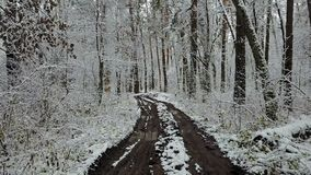 View of ditry road in the winter forest.  stock video footage