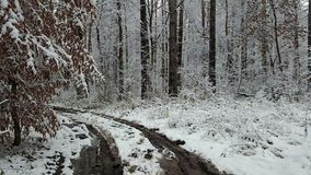View of ditry road in the winter forest.  stock video
