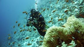 The view of a diver exploring a colorful reef, Red sea, Egypt stock footage