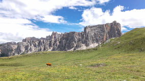 View of Dolomite Mountains landscape. View of Dolomite Mountains, blu sky, white clouds, green grass, cows italy Stock Photos