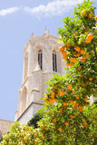 View of the dome of the Cathedral of Tarragona with tangerines, Spain Royalty Free Stock Photography