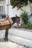 View at donkey Royalty Free Stock Image