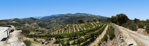View of the douro valley, portugal, wide Stock Photos