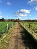 View down empty country path on beautiful Autumn day. Royalty Free Stock Photo
