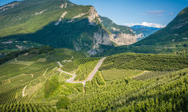View down the idyllic vineyards and fruit orchards of Trentino Alto Adige, Italy. Trentino South Tyrol. Stock Images