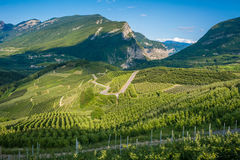 View down the idyllic vineyards and fruit orchards of Trentino Alto Adige, Italy. Trentino South Tyrol. Stock Image