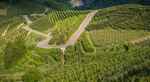 View down the idyllic vineyards and fruit orchards of Trentino Alto Adige, Italy. Trentino South Tyrol. View down the idyllic vineyards and fruit orchards of stock image