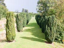 View down of law path through row of trees sunlight shadows to s Royalty Free Stock Images