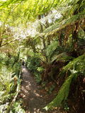View down the 1000 steps at the Dandenong ranges Royalty Free Stock Image