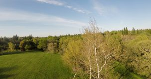 Drone View Above Trees With Blue Sky White Clouds. View From Drone Above Trees At Park And Woods Suburbs With Blue Sky And White Clouds Green Grass stock video footage