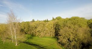 Drone View Moving Towards And Above Trees stock video