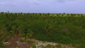 View from the drone on a huge thick forest of palm trees on the island. View from the drone on a huge thick green forest of palm trees on the island stock video