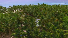 View from the drone of the tropical palm forest. View from the drone on a dense tropical palm forest stock footage
