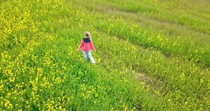 View from the drone on the young woman going across the field with yellow colors to summer sunny day.  stock footage