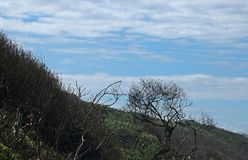 DRY BRUSH AT THE COAST. View of dry coastal vegetation and clouds in the sky Royalty Free Stock Image