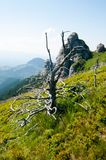 View of a dry tree and Goliat rock formation in Ciucas Mountains, Romanian Carpathians. Dry tree and Goliat, amazing rock formation of Ciucas Mountains, part of Royalty Free Stock Photography