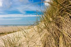 View from dunes to the beach on a sunny day, through dune grass royalty free stock photography