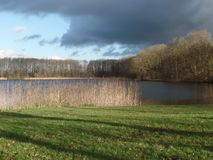 View of a Dutch lake surrounded by reeds and trees. Under an overcast sky Stock Photography