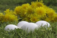 White eggs in the grass Stock Images