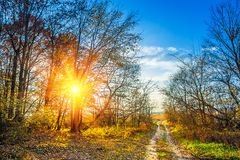 View on the edge of a forest in autumn sunset instagram stile royalty free stock images