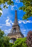 Eiffel Tower in spring. A view of the Eiffel Tower with spring trees Royalty Free Stock Image