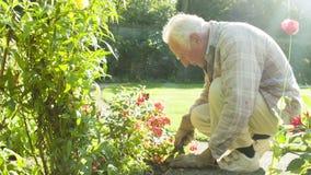 Elderly man gardening. A view of an elderly man gardening stock video footage