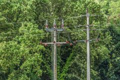 View of electricity poles and power lines with forest as background.  stock photo