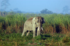 View of an elephant in a jungle. Stock Photography